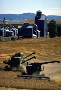Grain harvesting in Whitman County, Washington