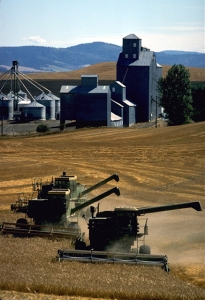 Grain harvesting in Whitman County, Washington